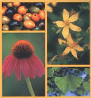 Therapeutic Guide to Herbal Medicines